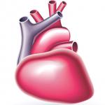 3Dプリンターで心臓を作る